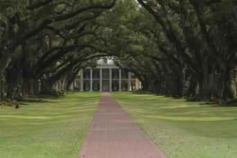Trees arching over road to plantation seen on New Orleans tour